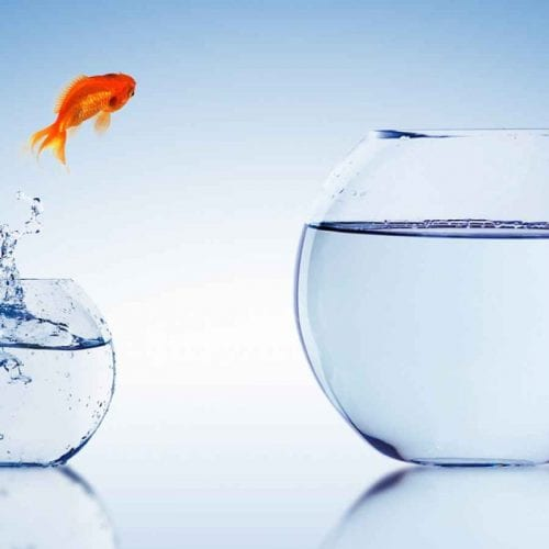 Allied Health Support Services Fish Jumping Out of Bowl Image